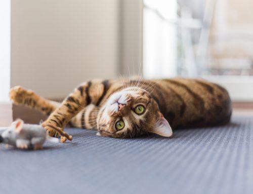 Cats Need Regular Veterinary Care, Too