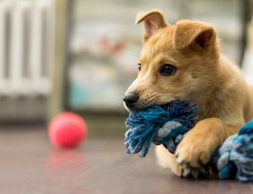A Happy, Healthy Puppy: 3 Steps to Success