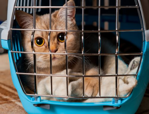 Preparing Your Pet For a Stress-Free Veterinary Visit