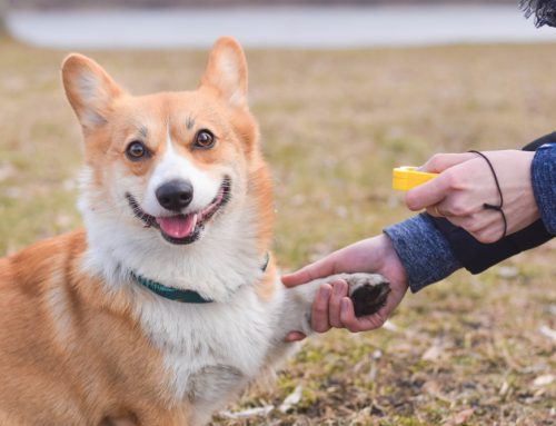 """Just Say """"Yes"""" to Positive Reinforcement Training for Your Pet"""