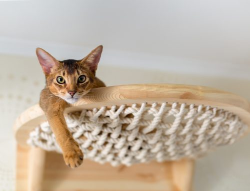 What Is Feline Enrichment and Why Is It Important?