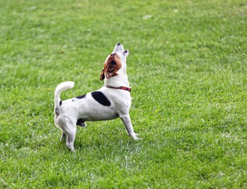 What Is My Dog Saying? How to Read Canine Body Language