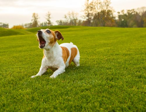 How to Handle 4 Common Dog Behavior Problems