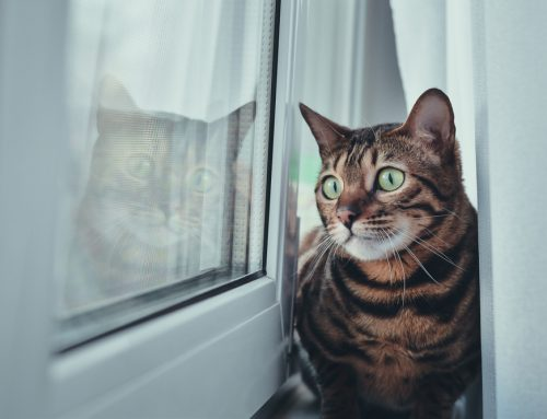 4 Important Facts About Separation Anxiety in Pets