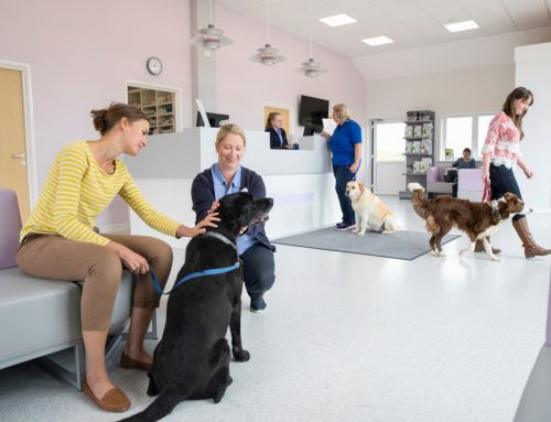 5 Reasons Your Dog Benefits From Fear Free Certification