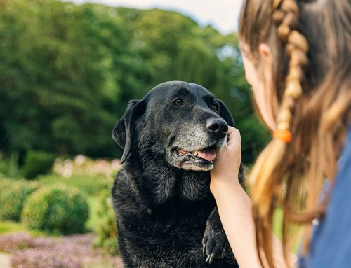 Forgetful Fido: Does My Dog Have Dementia?