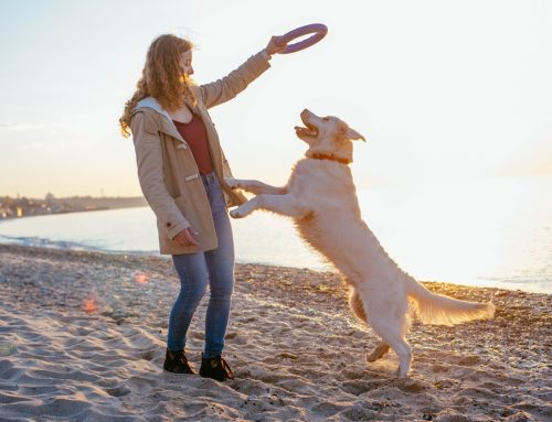 Summer Boredom Busters—5 Enrichment Activities For Your Dog