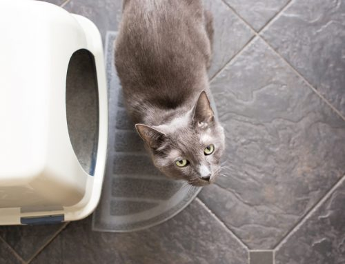 The Wrong End of the Cat – Why You May be Misunderstanding Litter Box Behavior