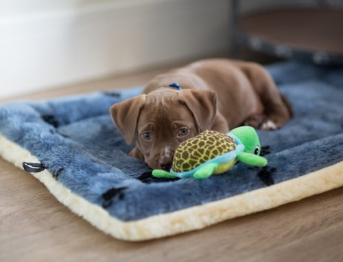 Do's and Don'ts of Puppy Socialization