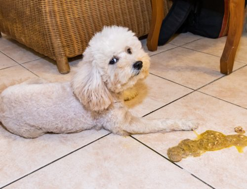 Why Is My Dog Vomiting?