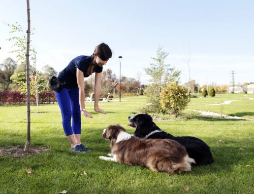 6 Questions to Ask When Choosing a Dog Trainer