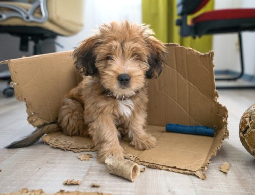 Channel Your Puppy's Energy to Improve Their Behavior