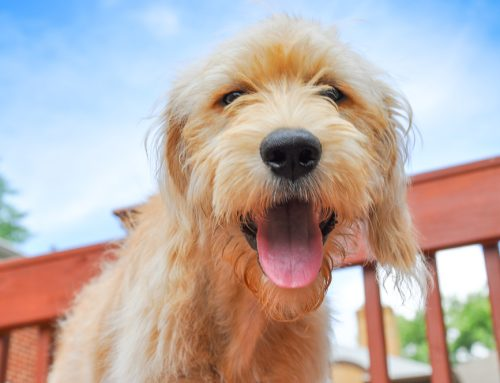 9 Answers to Your Questions About Spaying and Neutering Your Pet